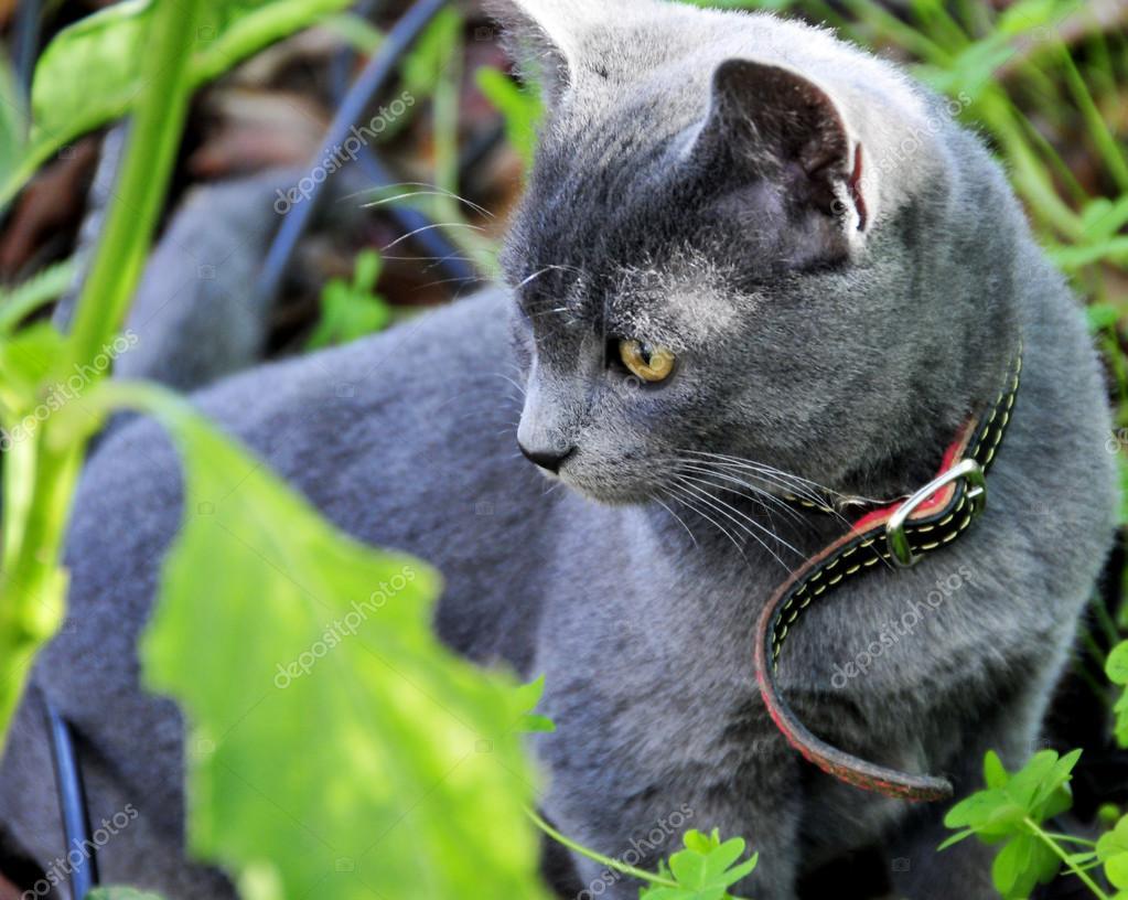 gato, color gatito azul — Foto de stock © oksy001 #107928808