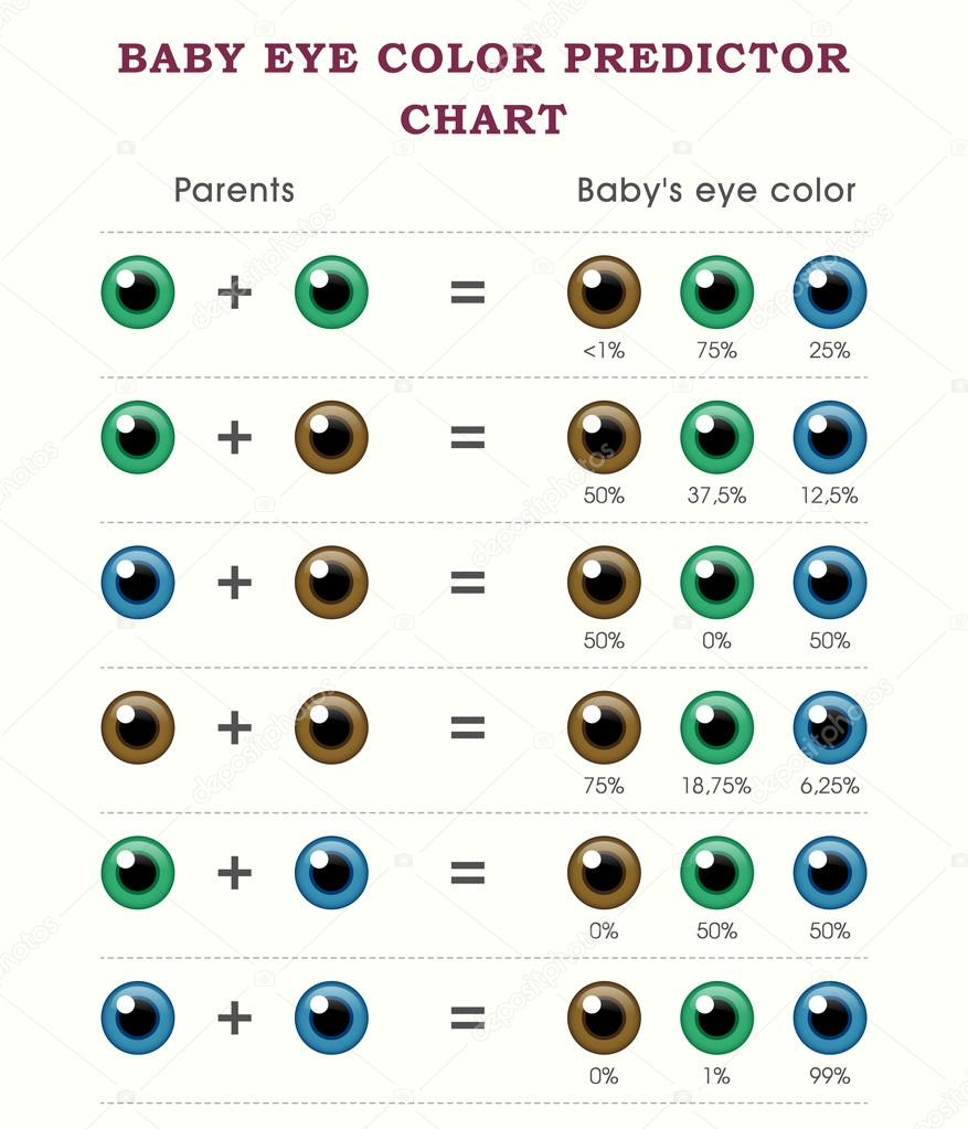 Baby Eye Color Predictor Chart Template Stock Vector
