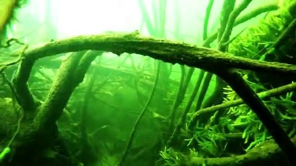 Podvodní svět, řeka