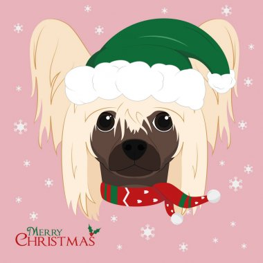 Christmas greeting card. Chinese Crested Dog with green Santa hat and a woolen scarf for winter icon