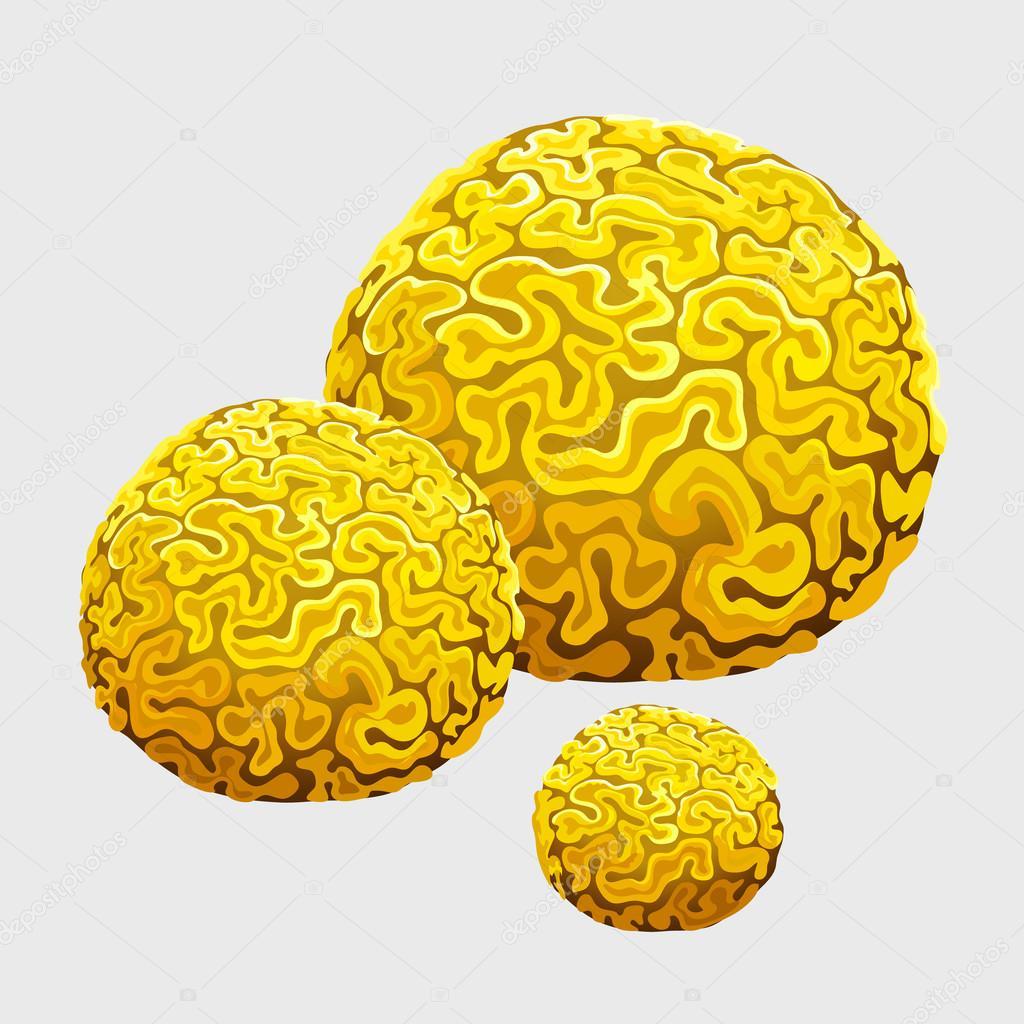 Esponja submarina amarillo, pólipos en forma de cerebro — Vector de ...