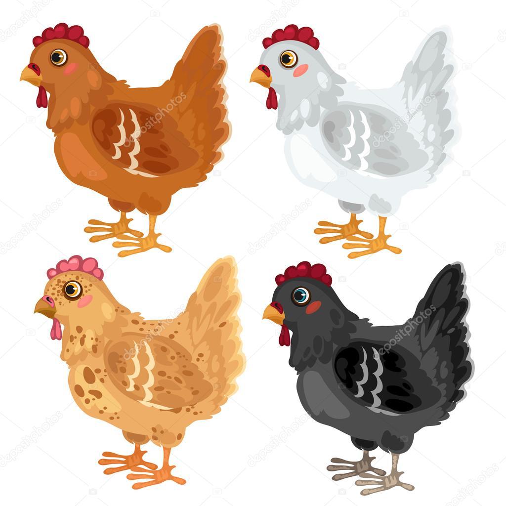Diferentes colores de pollo de dibujos animados, vector de animales ...
