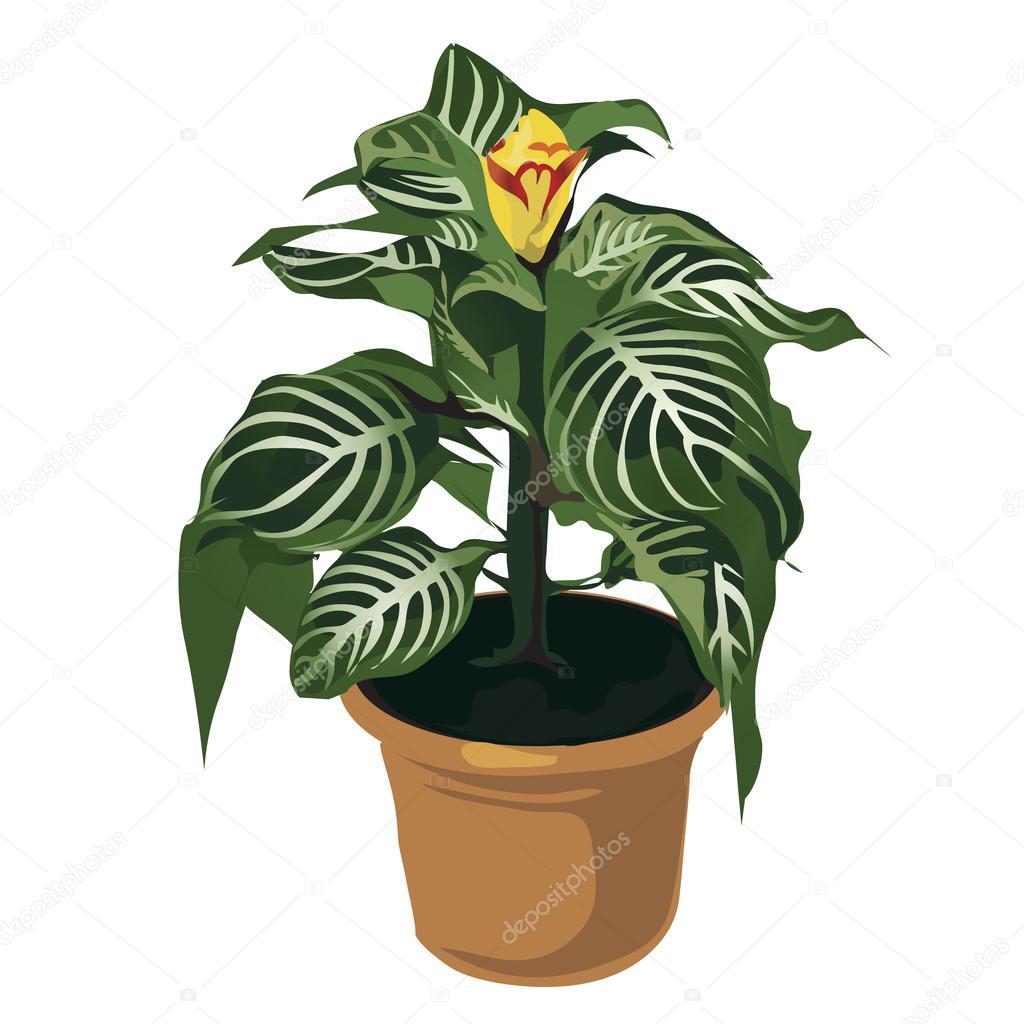 Fleur Jaune Decoratif En Pot Fleurs Isolees Image Vectorielle