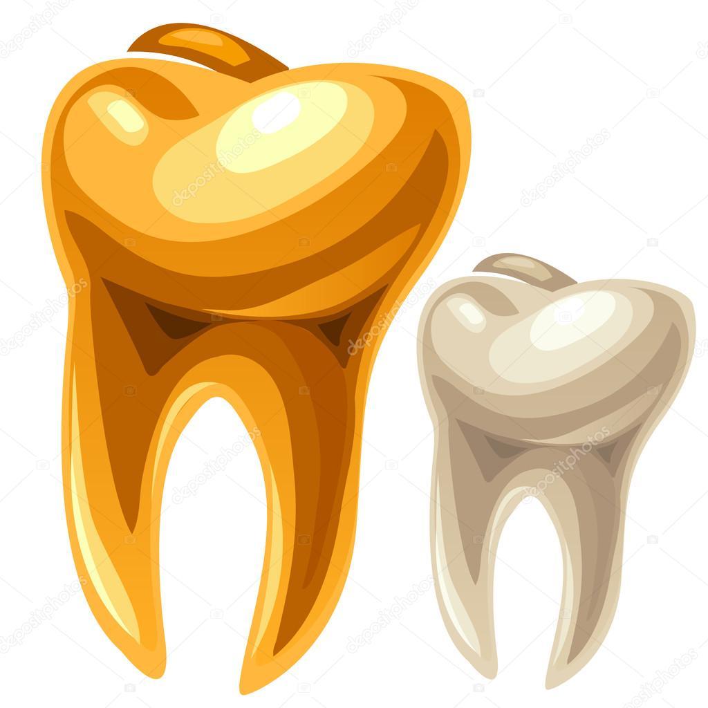 Gold und weißem menschlichen Zahn — Stockvektor © Anton_Lunkov ...