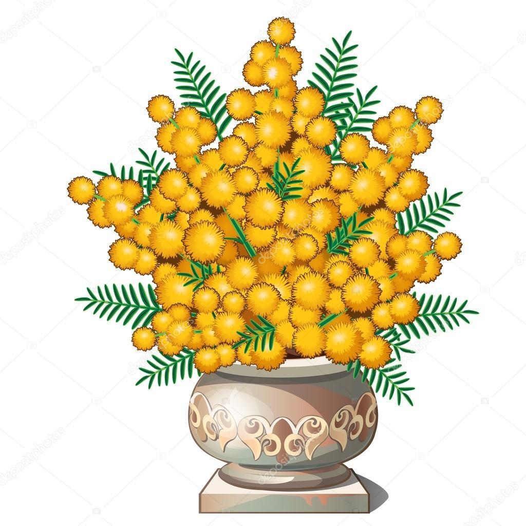 Bellissimo bouquet di mimosa in vaso vettoriali stock for Mimosa in vaso