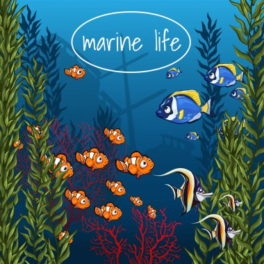 Marine life in bright colors