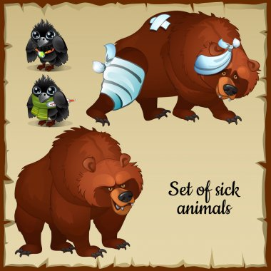 Sick and healthy bears and birds