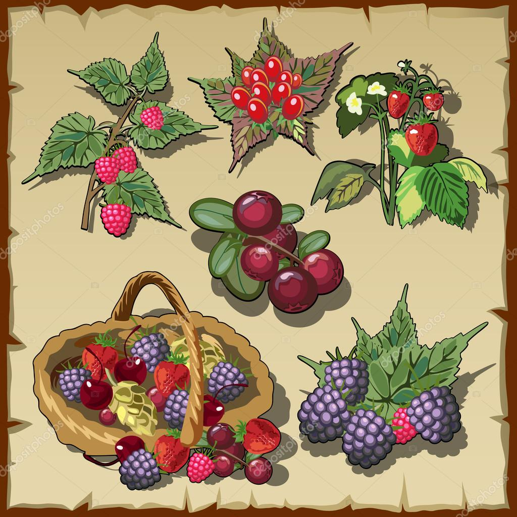 Big collection of red ripe delicious berries