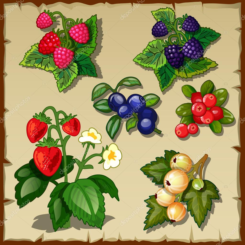 Great berry set, mix of six types of berries