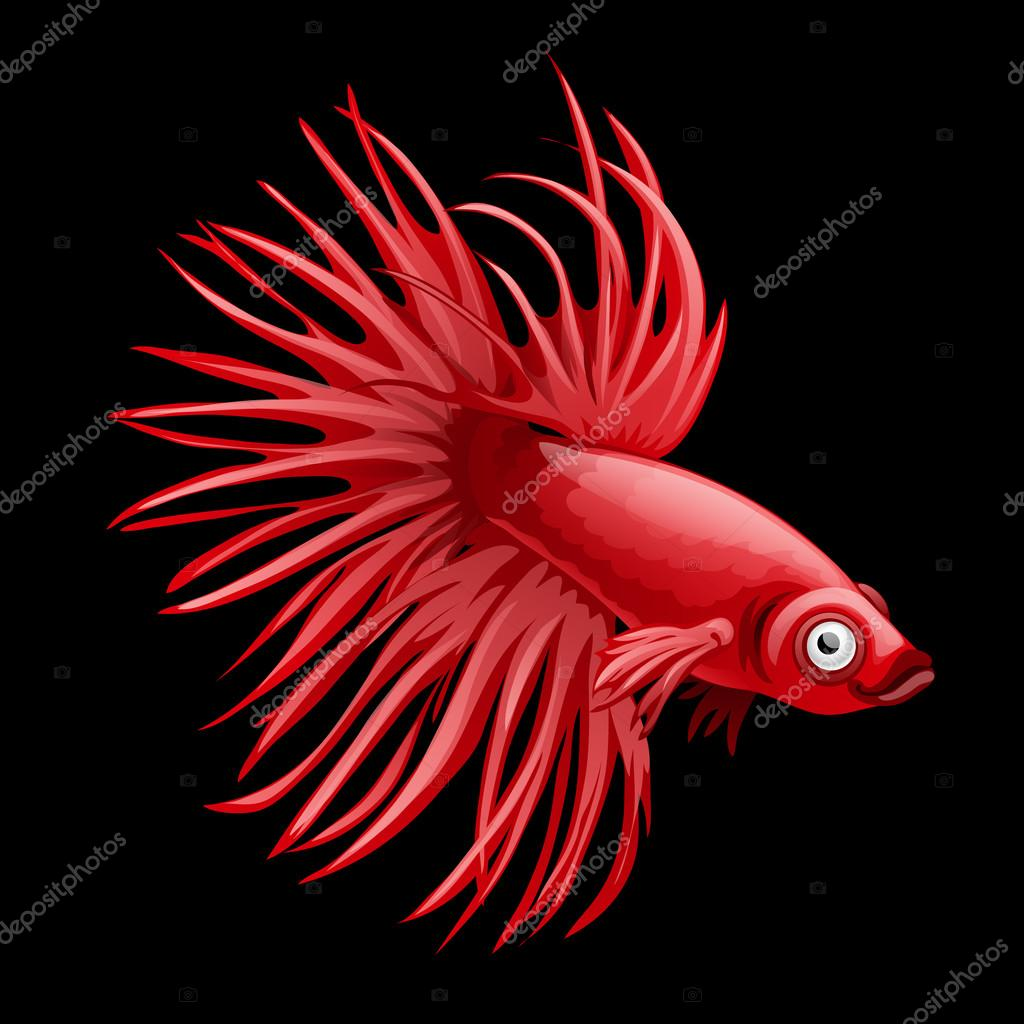Single red fish rooster closeup, cartoon vector