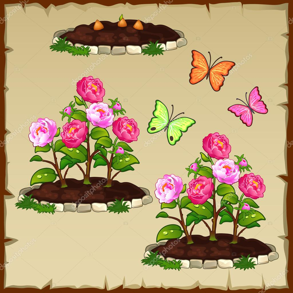 Set flower beds growing out of it with pink peony and butterflies