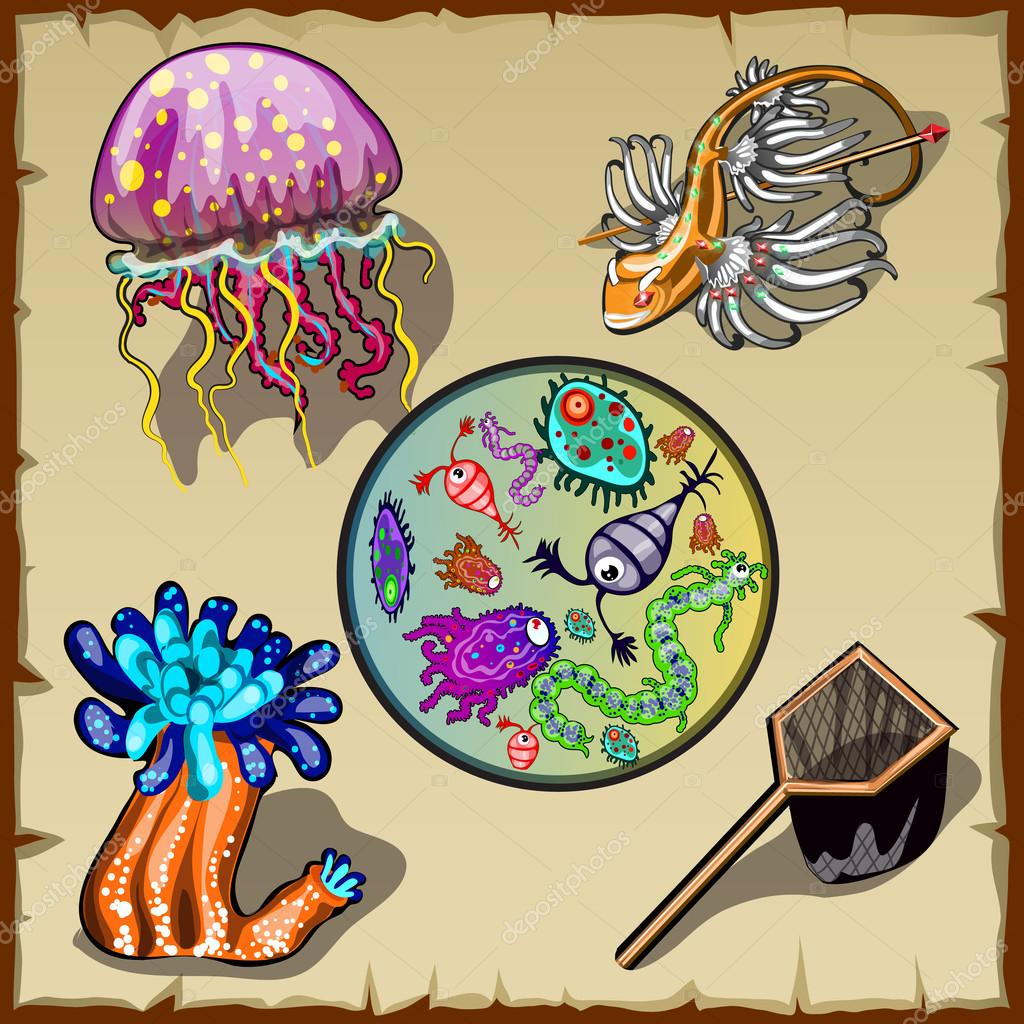 Inhabitants of the underwater world and various microorganisms, five items