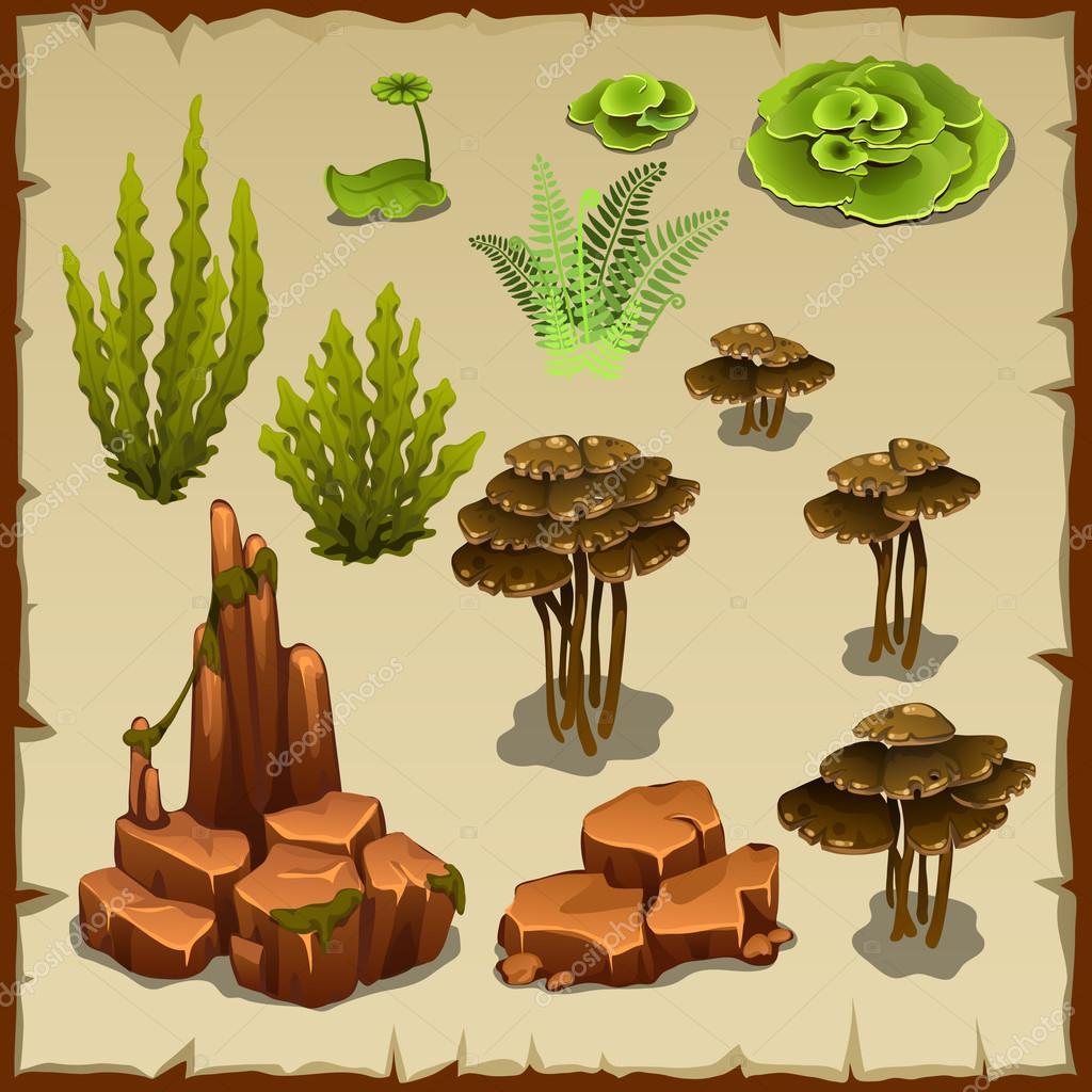 Big set of variety underwater plants and stones