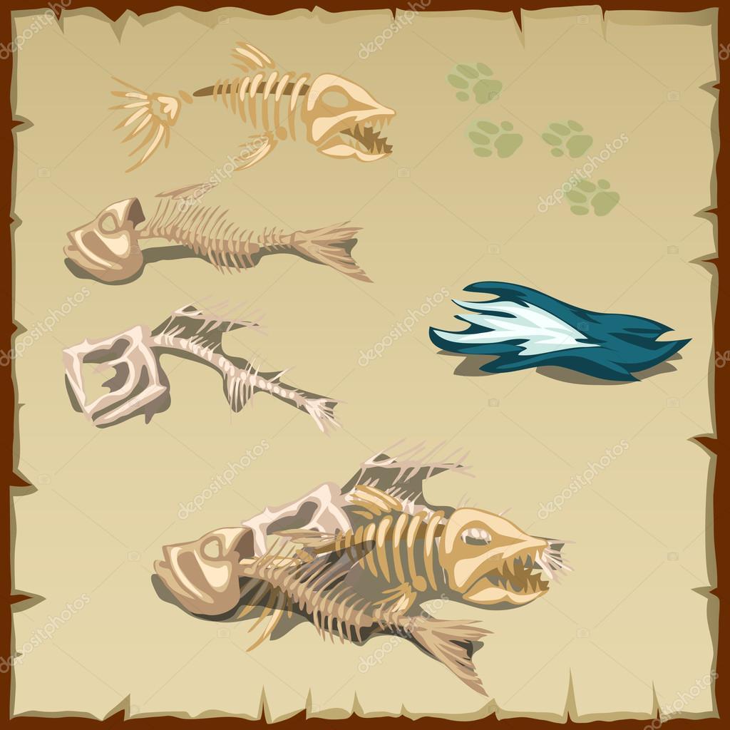 Esqueletos de peces y otros elementos — Vector de stock ...