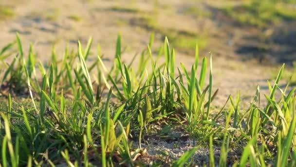 Zár-megjelöl-ból zöld fű a homok. Lassan