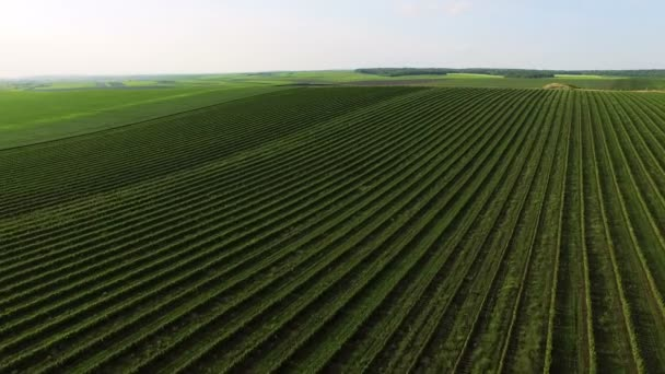 Aerial view of green fields, plantation, nature, sky background 4k