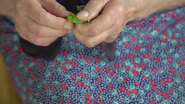 Old wrinkled hands shelling green peas in the village