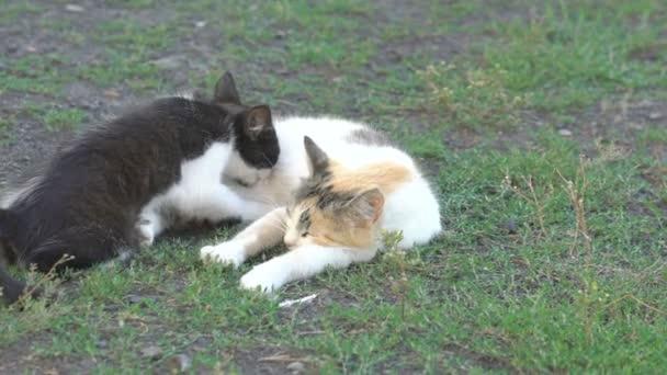 Kitten sucking mothers milk on the green grass