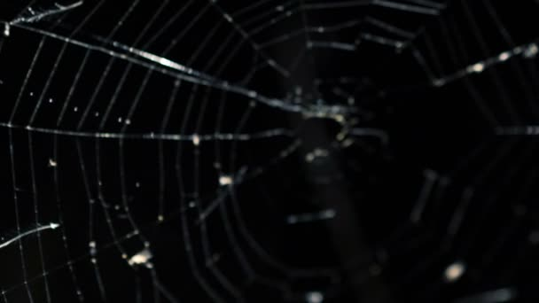 Horror scaring through the alight spider web in darkness