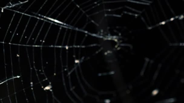 Orrore paura attraverso la tela del ragno di scendere nelle tenebre