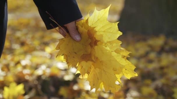 Mužská ruka drží javorové listy v podzimním parku