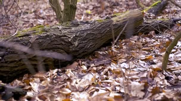 gefällte Baum im Wald
