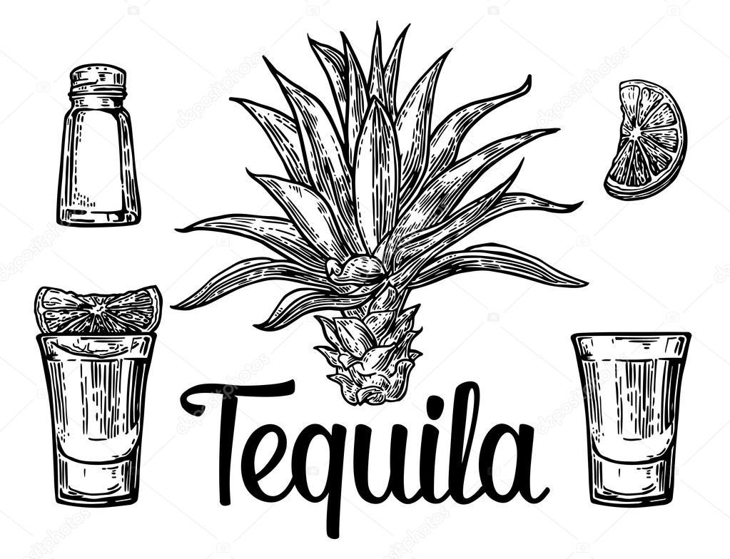 Vidrio y botlle de tequila. Cactus, sal y limón dibujados ...