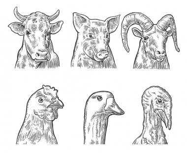 Farm animals icon set. Heads pig, cow, chicken, goose, turkey and goat isolated