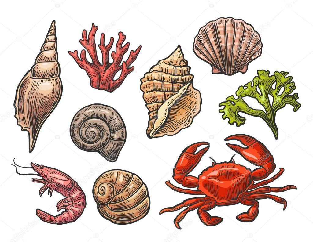 Set de coquillage, de corail, de crabes et de crevettes ...