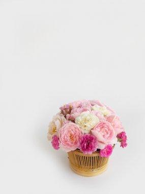Beautiful English rose blooming background