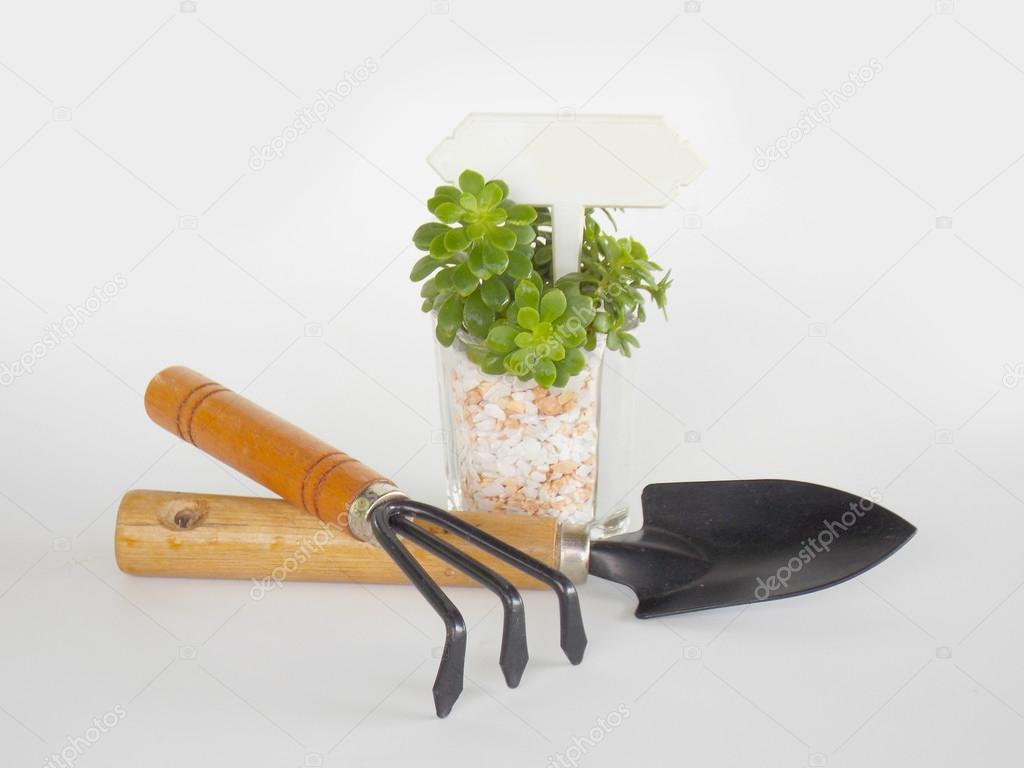 Small succulent with garden tool on white background