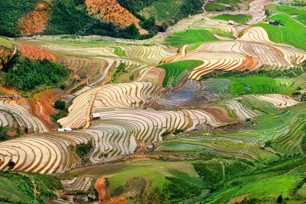 Rice fields on terraced and water of Mu Cang Chai, YenBai, Vietnam. Rice fields prepare the harvest at Northwest Vietnam.Vietnam landscapes.