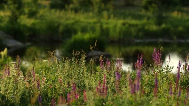letní krajina příroda