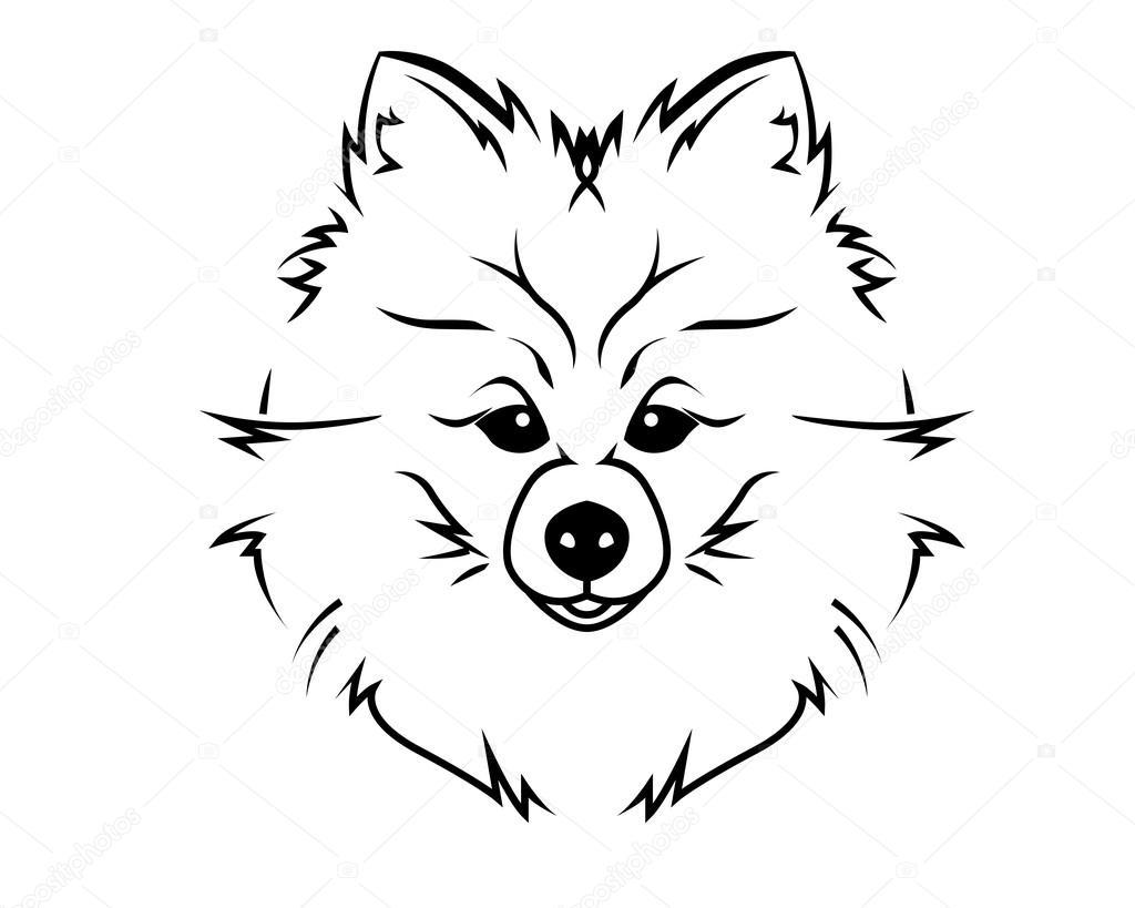 Perro raza línea arte Logo - Pomerania — Vector de stock ...