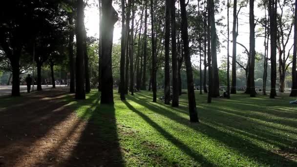 A város Sao Paulo Ibirapuera Park