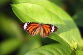 Fényképek Pillangó a leveles zöld háttér