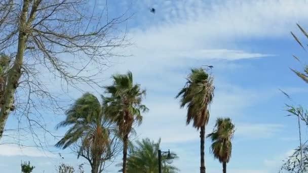 Zblízka palem proti obloze kymácí ve větru za denního světla