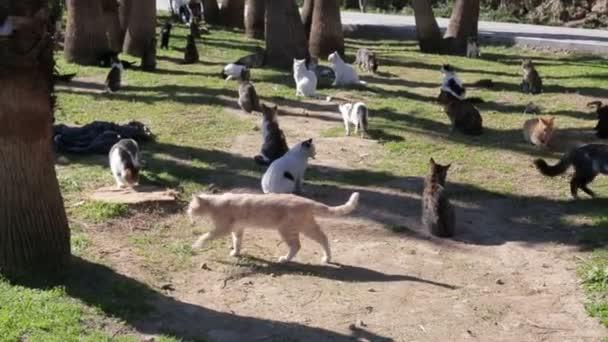 jede Menge Spaß Mischlingshunde spazieren im Park.