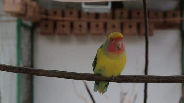 Žluté papoušek sedící na bidýlku