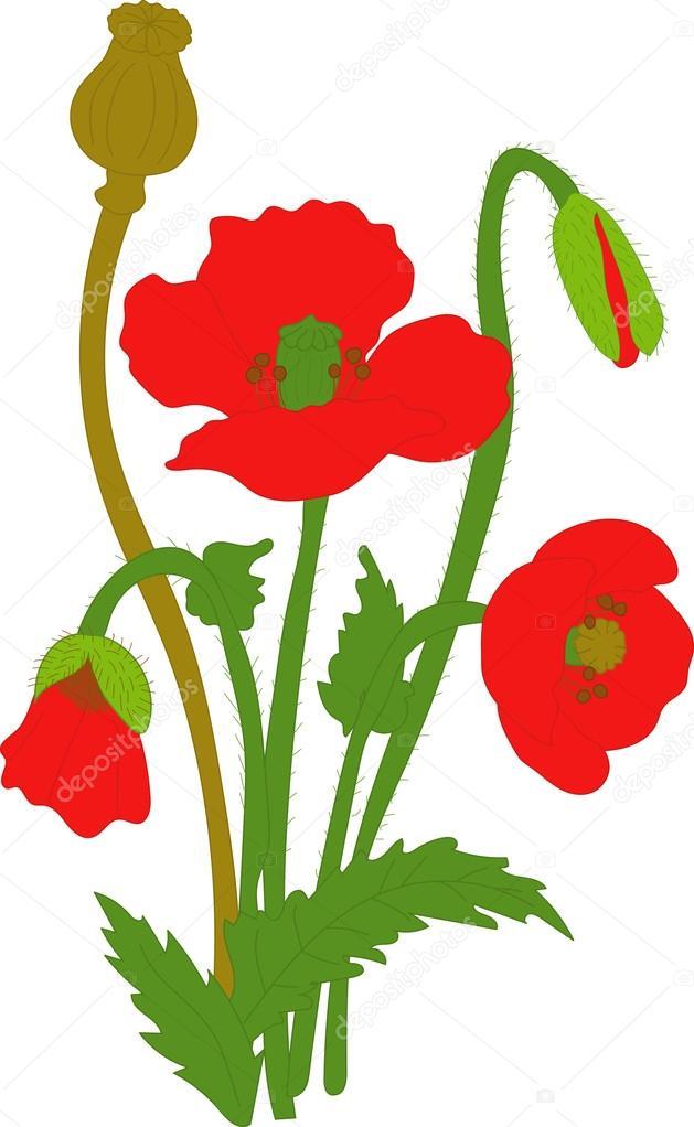 Separate elements flowers red poppy flowers leaves bolls buds on separate elements flowers red poppy flowers leaves bolls buds on a transparent mightylinksfo