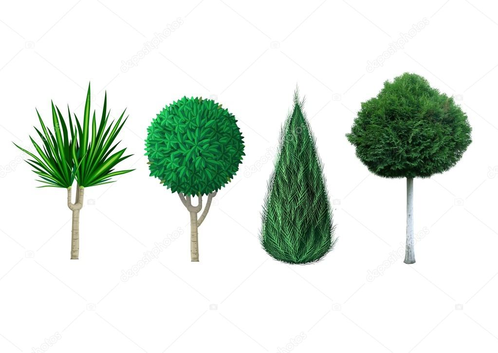 вечнозеленые декоративные растения