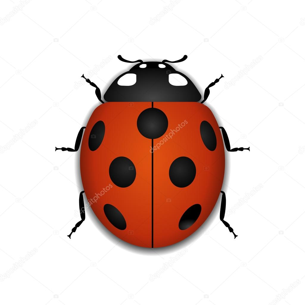 Ladybug Red Cartoon Icon Realistic Stock Vector Alona S 123048380