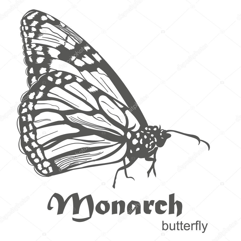 Dibujos Mariposa Monarca Dibujo Vector De Las Mariposa Monarca
