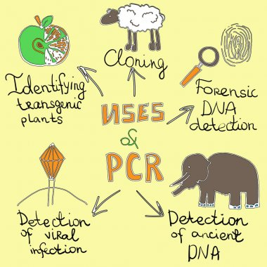 uses of pcr handdrawn