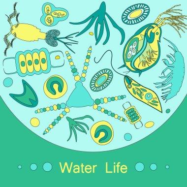plankton phytoplankton zooplankton outline