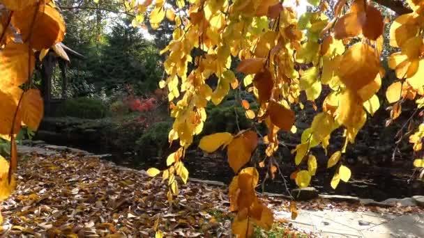 Světlé barvy podzimní přírody v podhůří Kavkazu
