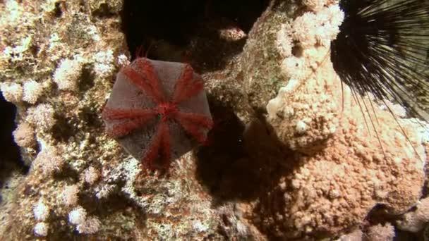 Potápění v Rudém moři poblíž Egypt.