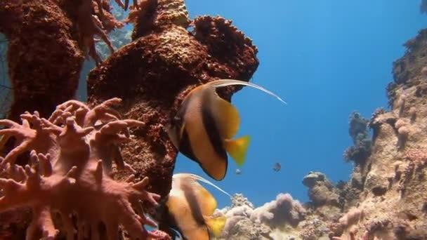 Tauchen im Roten Meer in der Nähe von Ägypten