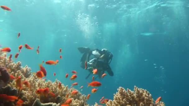 Diving in the Red sea near Egypt.