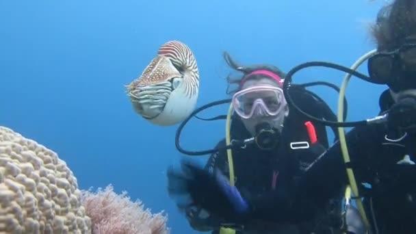 Toller Tauchgang mit erstaunlichen Weichtieren der Nautilus.